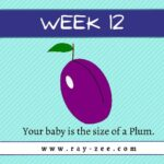 Week 12 Pregnancy