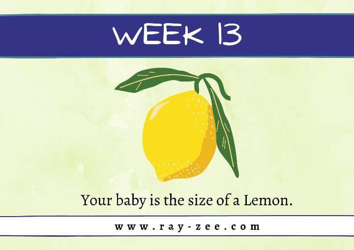 Week 13 Pregnancy